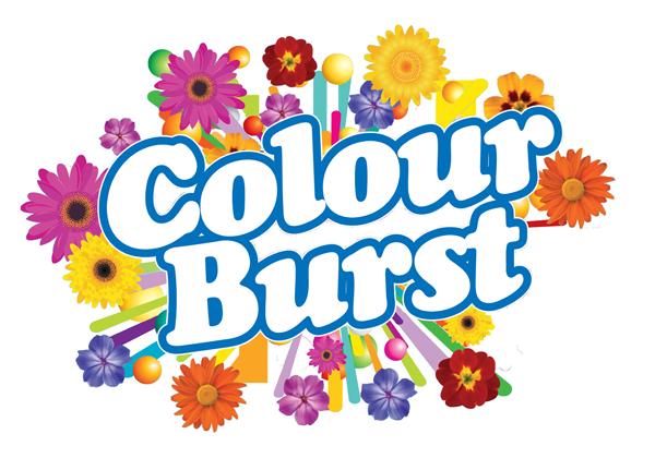 Sunnyvale Plants - Colour Burst